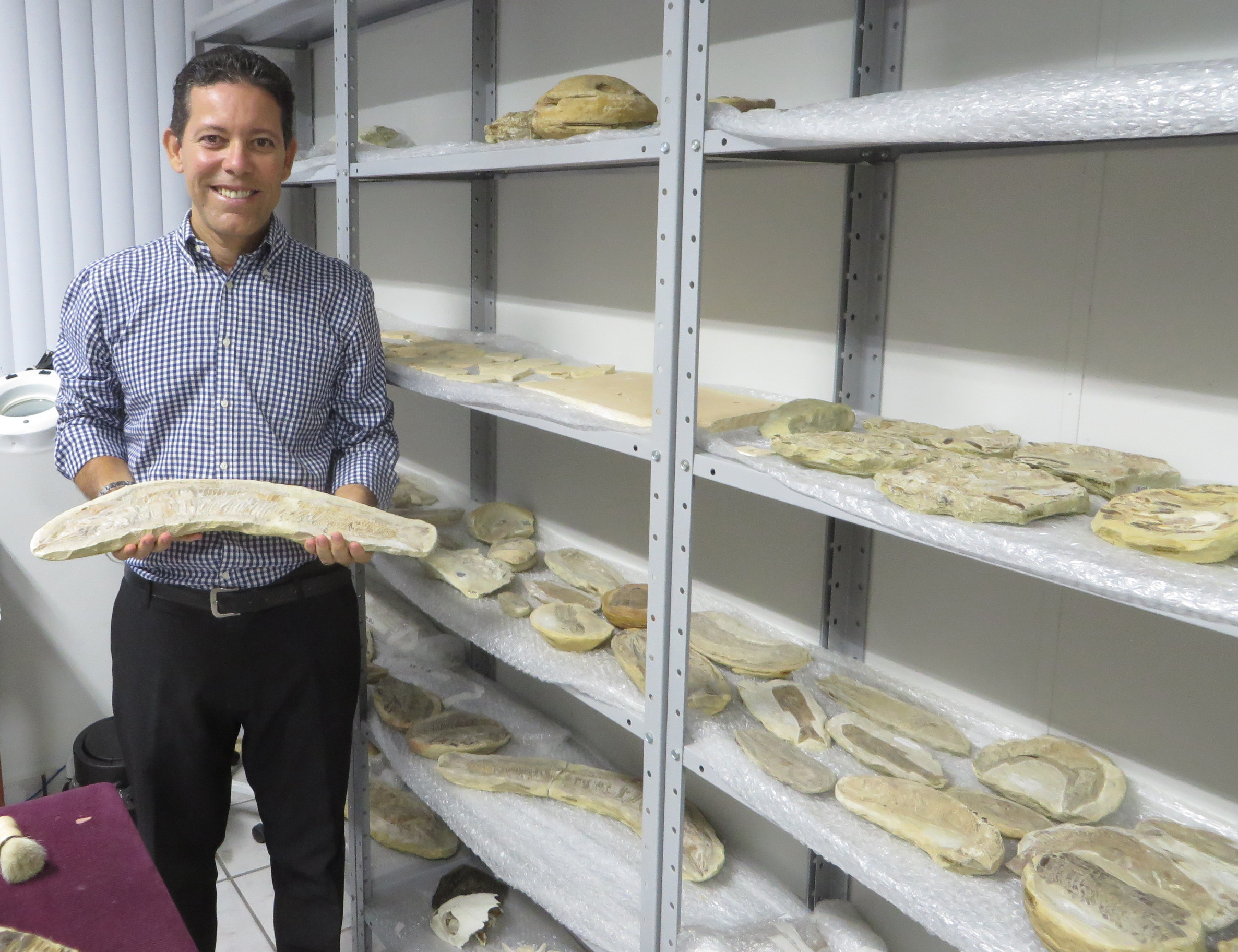 Dr. Silva shows some of the Santana Formation fossil fish stored in the preparation room of the Center.