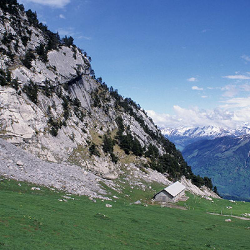 Slope of Mount Pilatus